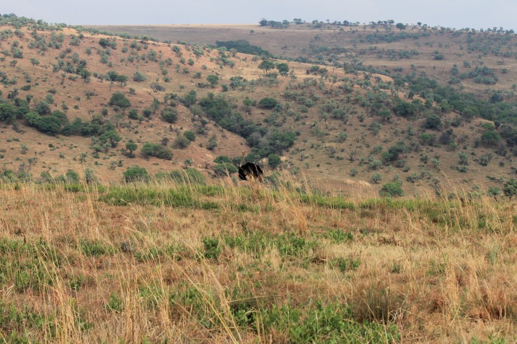 south africa hunting scenery