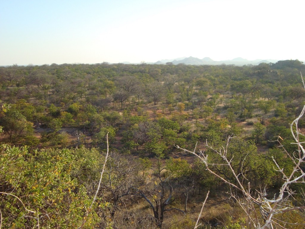 South Africa Hunting limpopo scenery