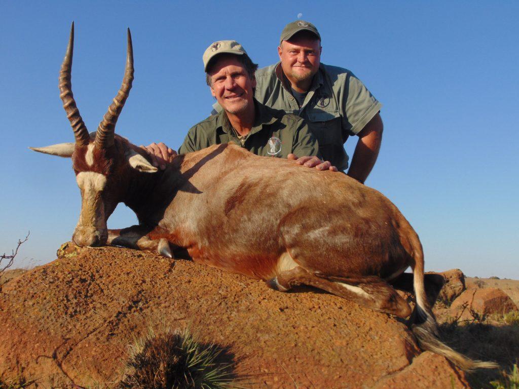 african plains game hunting safari blesbok