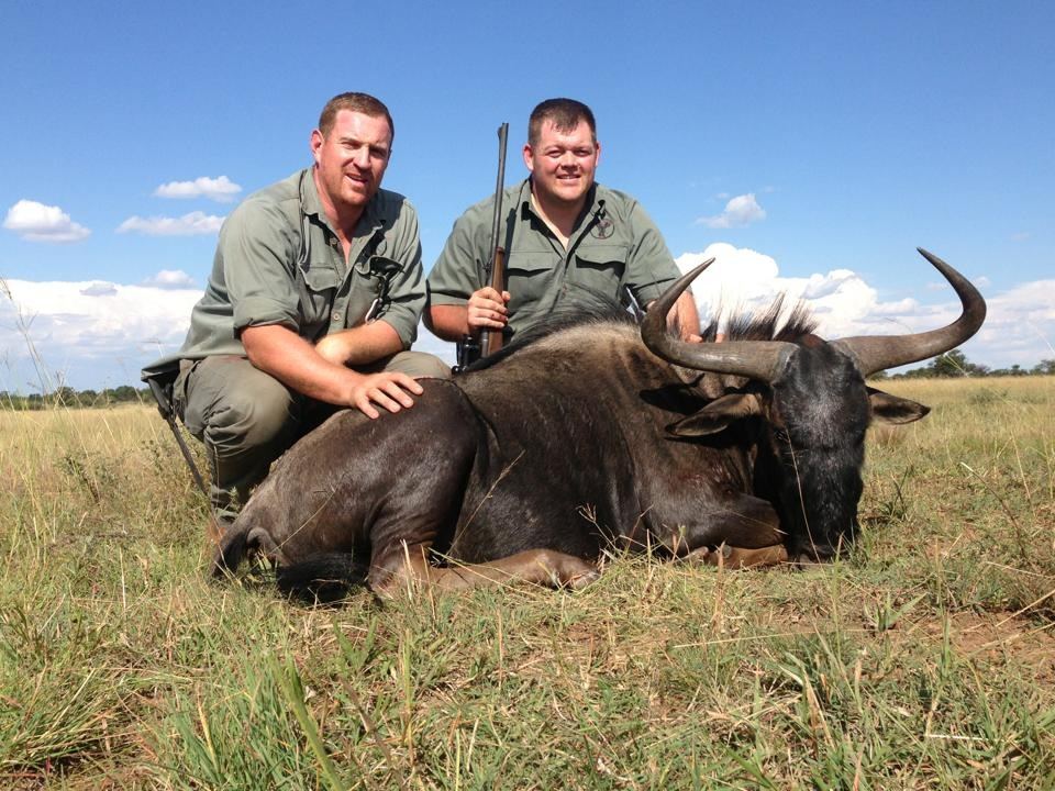 trophy blue wildebeest hunting in south africa 1