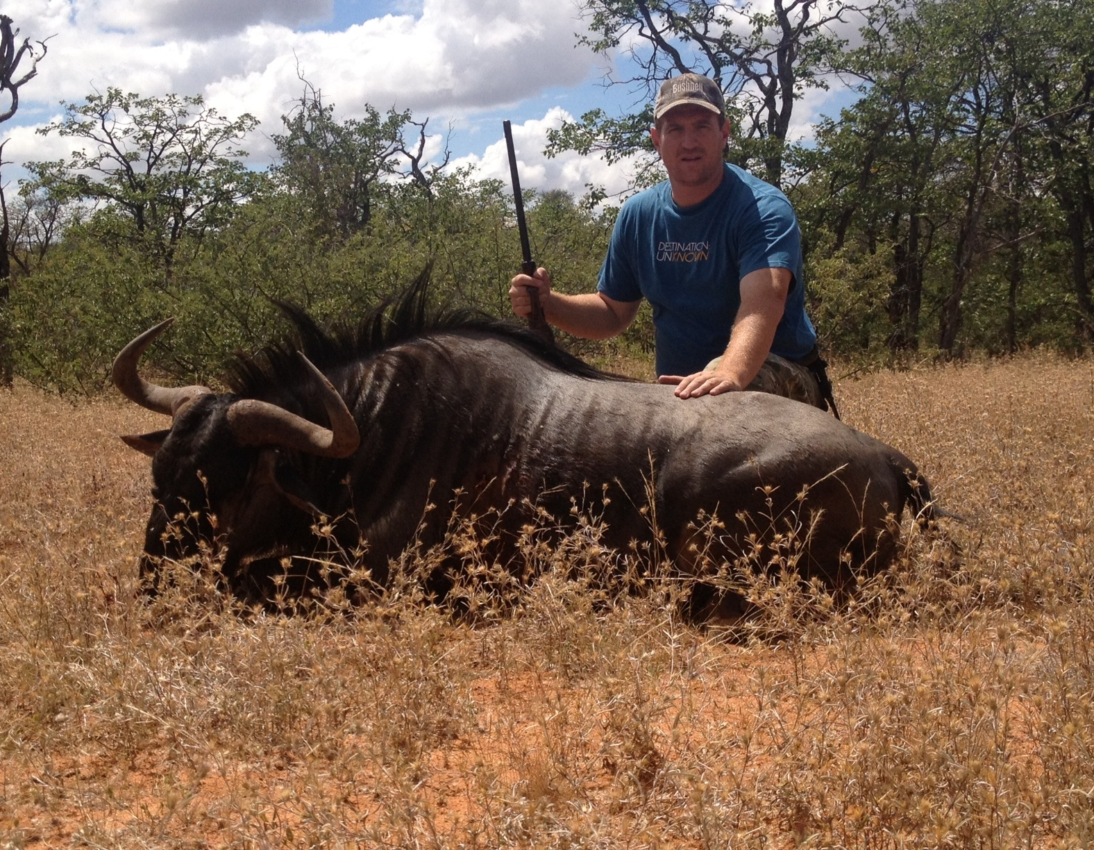 trophy blue wildebeest hunting in south africa 3
