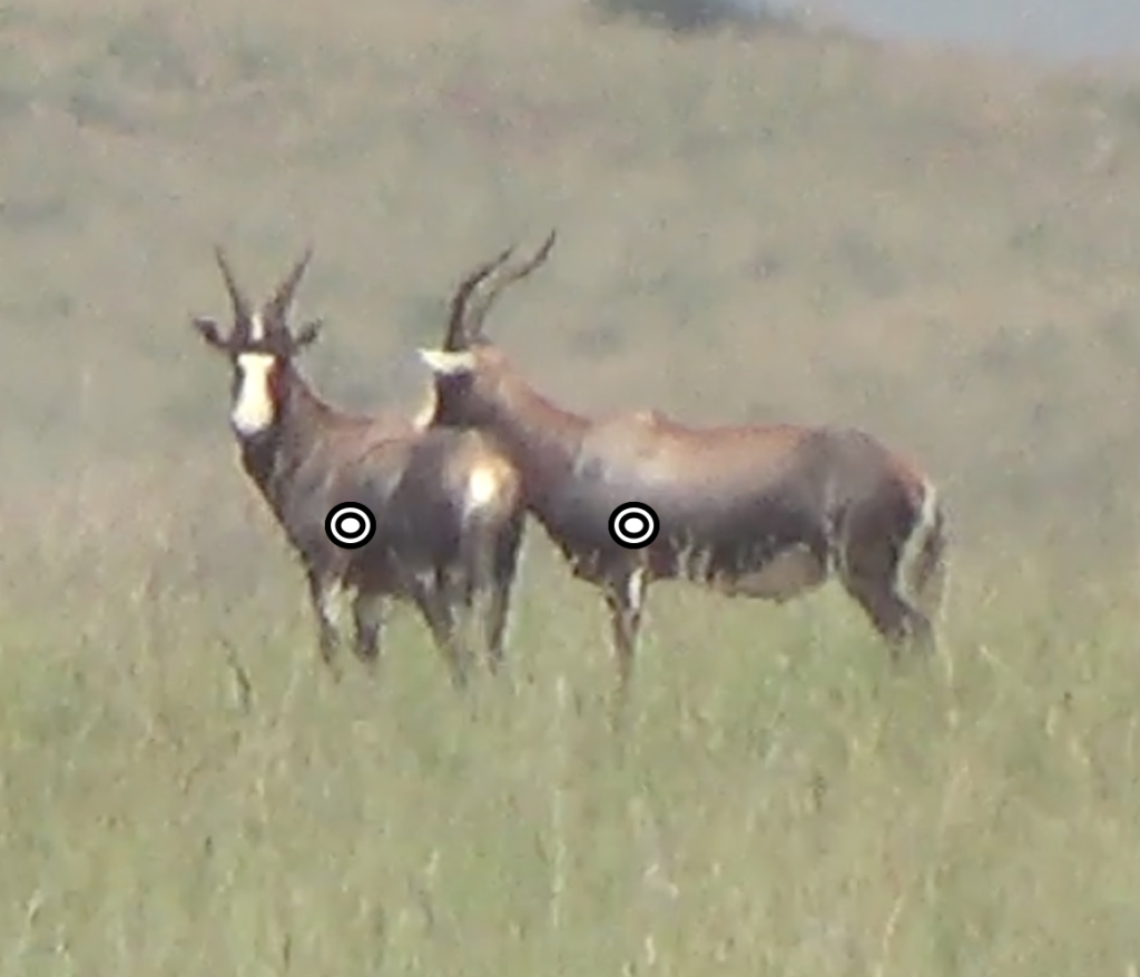 trophy blesbok hunting in south africa shot placement broadside quartering