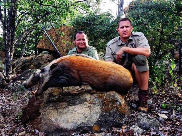 trophy bushpig hunting resize 1