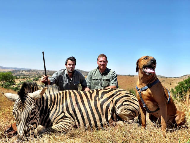 trophy zebra hunting in south africa 2
