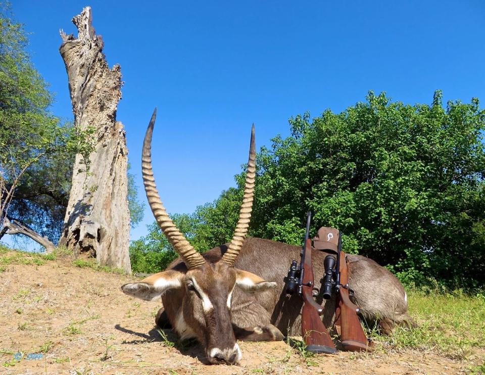 2017 south africa hunting specials waterbuck