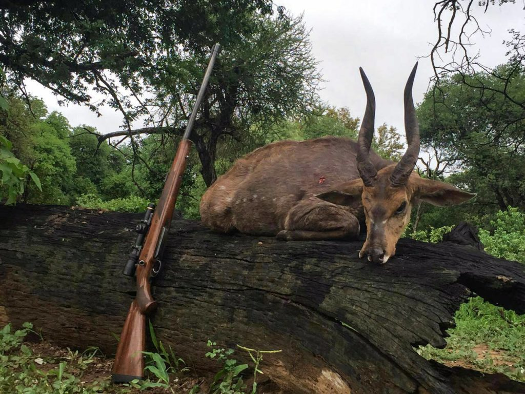 bushbuck hunting in south africa new