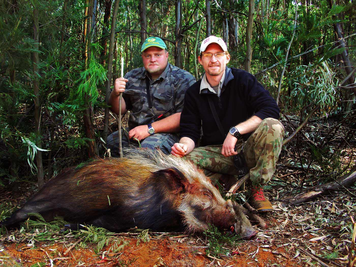 south africa hunting bushpig