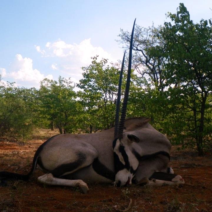 Trophy Gemsbok Hunting In South Africa 2n