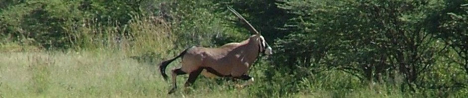 Trophy Gemsbok Hunting In South Africa featured
