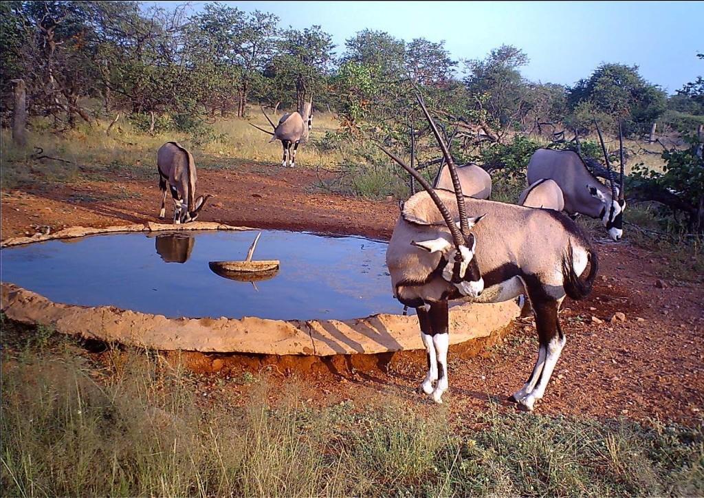 trophy gemsbok hunting in south africa female