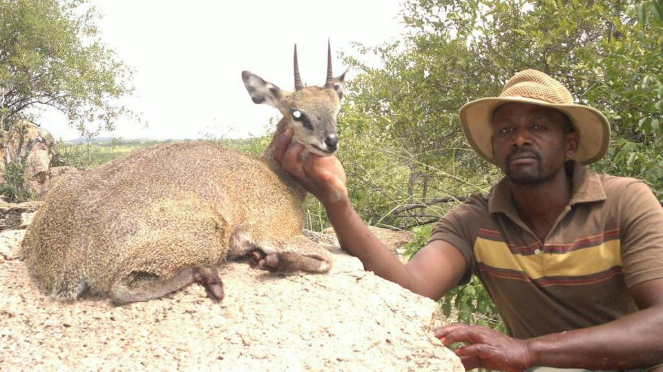 trophy klipspringer hunting in south africa 2
