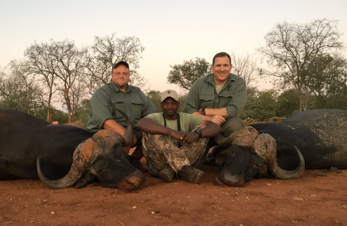 cape buffalo hunting in south africa 2 bulls june 2016