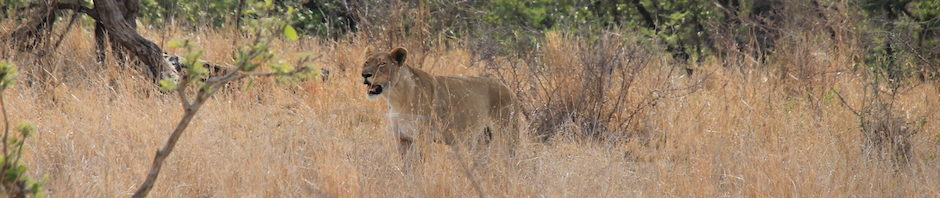 hunting conservation promotes wildlife conservation