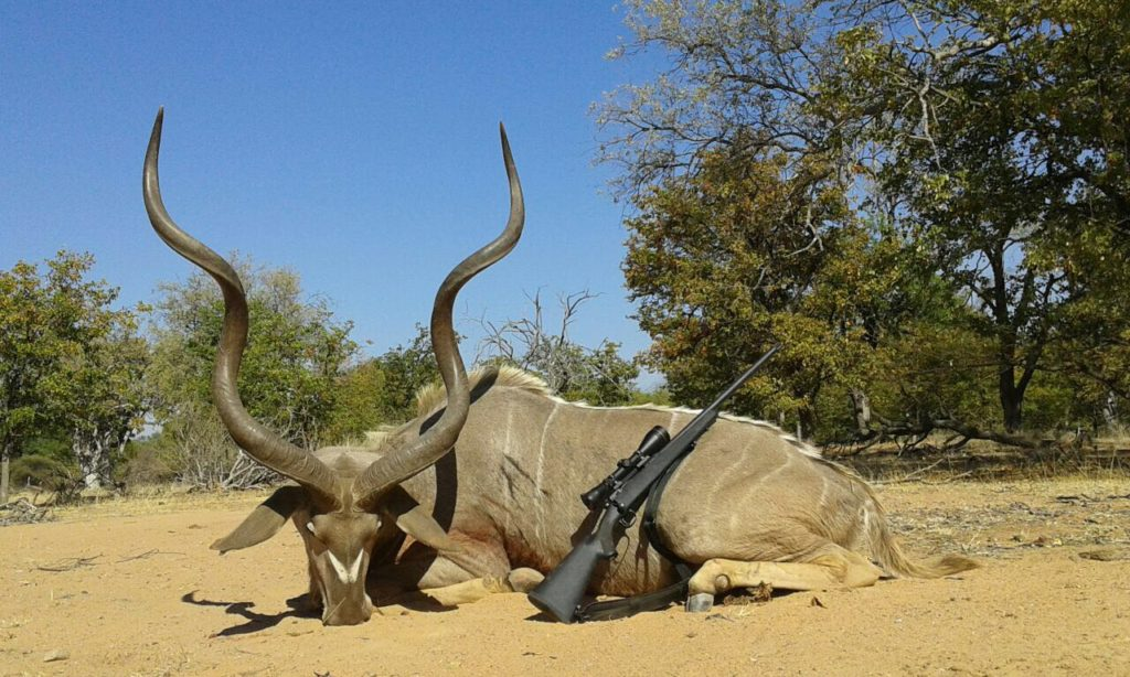 kudu hunting in south africa 5