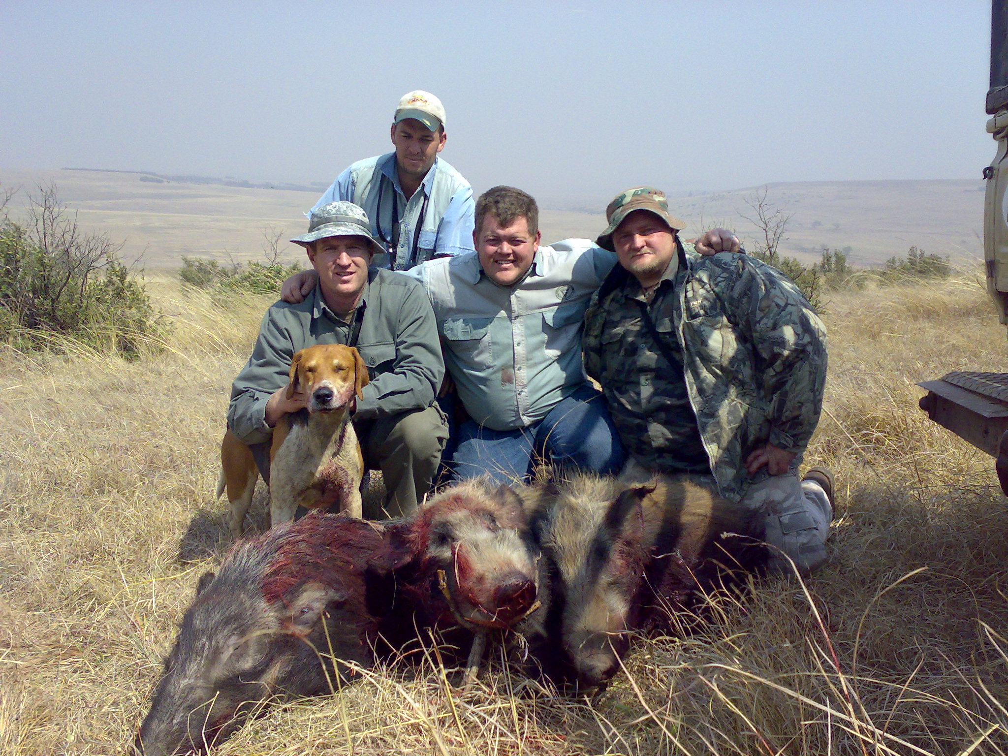 bushpig hunting south africa 8