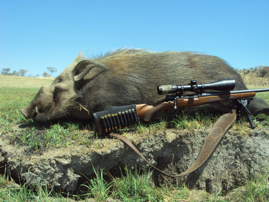 bushpig hunting south africa 3