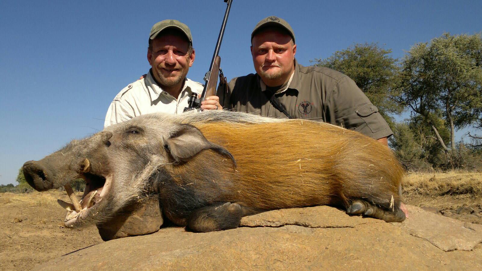 bushpig hunting south africa 4