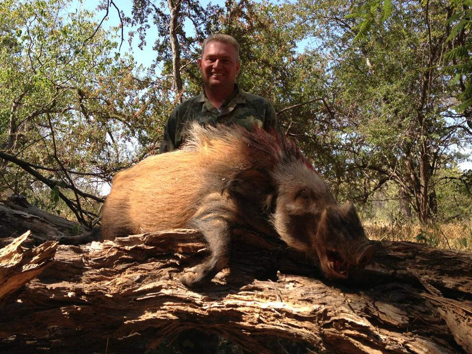 bushpig hunting south africa 7