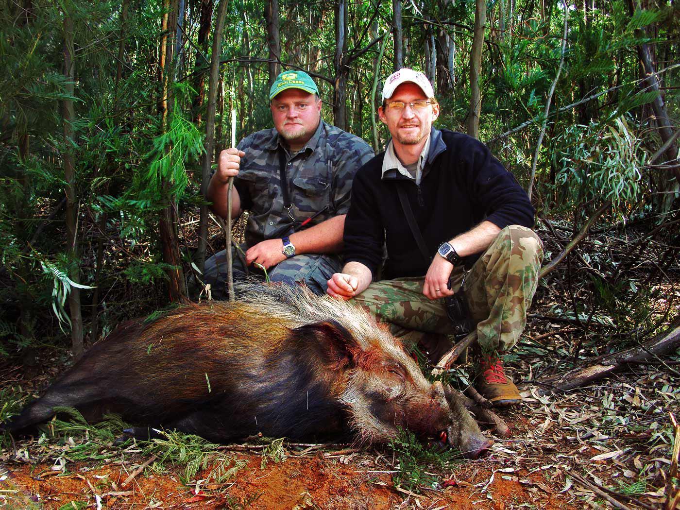 bushpig hunting south africa 1