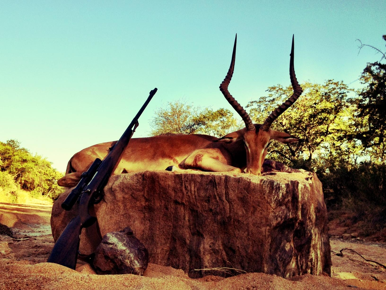 South Africa hunting photos impala