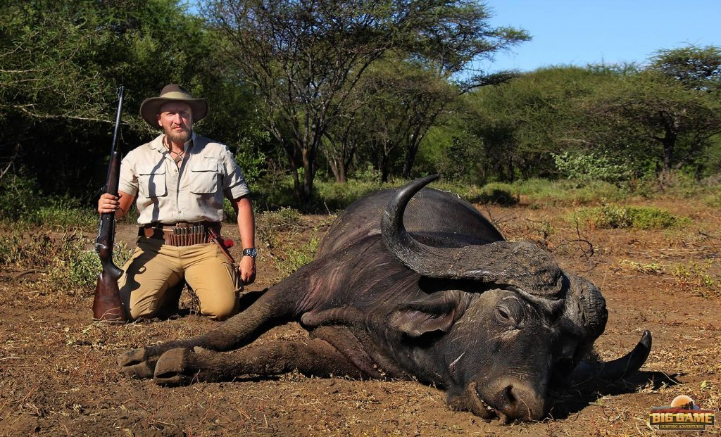 cape buffalo hunting trophy