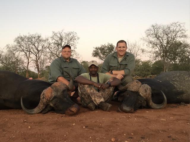 cape buffalo hunting south africa 2 buffalo