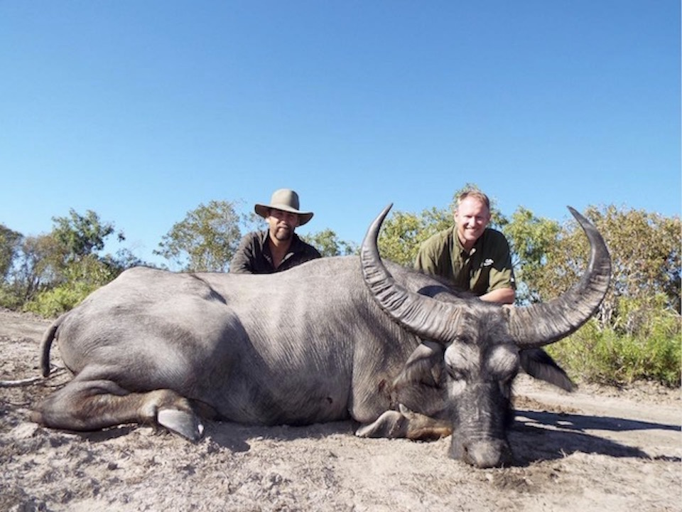 Cape Buffalo Hunting In South Africa | Big Game Hunting ...