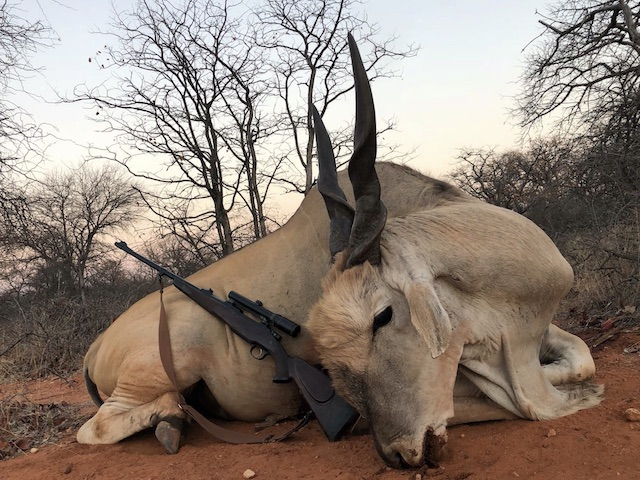 picture of south africa hunting eland